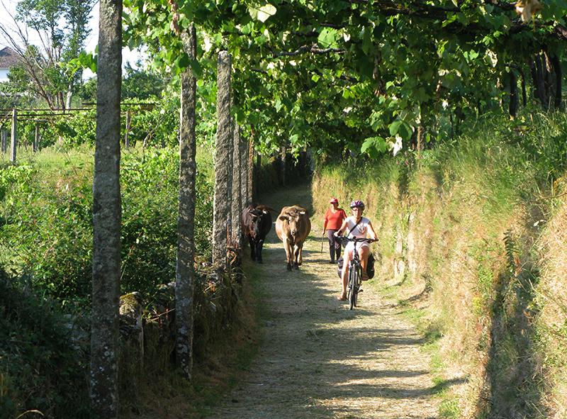 Camino Portugues_20100623_38_